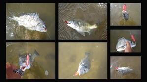 8月の釣り - A.サトの黒鯛BlogⅡ