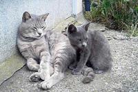 灯台猫たち2018.08.23 - ちわりくんのありふれた毎日II