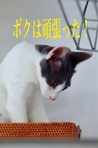 にゃんこ劇場「登頂成功!」 - ゆきなそう  猫とガーデニングの日記