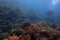 18.8.298月も、アッと言う間に終盤 - 沖縄本島 島んちゅガイドの『ダイビング日誌』