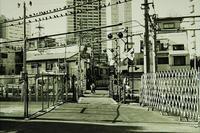 Kodak Tri-X400×Fuji SPD(1+1)Rollei 35TE - モノクロフィルム 現像とプリント 実例集