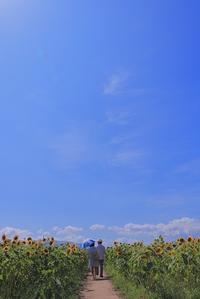 君に恋した夏の日 - 赤煉瓦洋館の雅茶子
