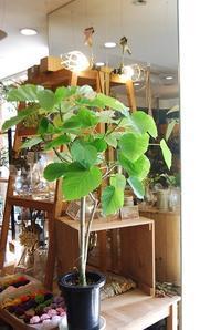 グリーン🎵グリーン🎵 - 花と暮らす店 木花 Mocca