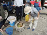 柿渋づくり、60年ぶりの復活。 - 大朝=水のふる里から