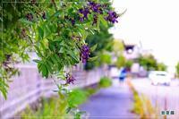 夏藤咲く散歩道&陶器の箸置き - 気ままにデジカメ散歩