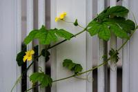 塀に咲く - 彩りの軌跡