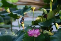 久しぶりのカワセミ - azure 自然散策 ~自然・季節・野鳥~