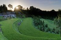 緑の棚田~夕照 - katsuのヘタッピ風景