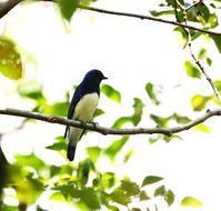 北摂山間での出会い・・・ - 一期一会の野鳥たち