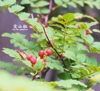 築山 - HAIKU/autumn PHOTO