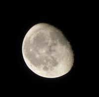 夜の庭と月 - ヒバリのつぶやき