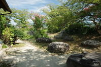 橿原市城殿町 元薬師寺址  百日紅 - ぶらり記録:2 奈良・大阪・・・