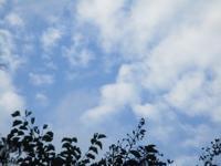 実りの秋・・・イチジクとゴーヤ8月30日 - 雲居