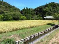 稲刈りの準備着々と… - 千葉県いすみ環境と文化のさとセンター