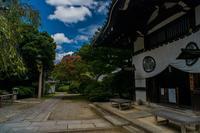 養源院と法住寺の百日紅 - 鏡花水月