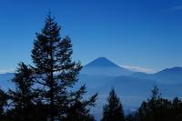 夏富士を堪能甘利山 - いぐさん流 山と花の写真(富士山)