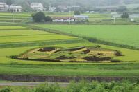 田んぼアート① (撮影日:2018/8/29) - toshiさんのお気楽ブログ