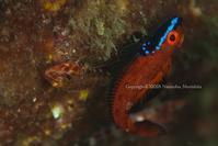 命を繋ぐ - Diving Life ~Aita pe'a pe'a~