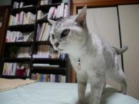 モン様、お似合いです - ご機嫌元氣 猫の森公式ブログ