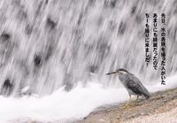午後から雷雨が! - Weblog : ちー3歩