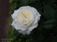 Terminando agosto.. - Gardener*s Diary