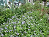 8月も今日で終わり。そして庭は・・・。 - 花の自由旋律