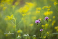 8月の赤城自然園の花々*vol.1 - MIRU'S PHOTO