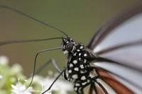 アサギマダラが居た居た!♪・・・マクロで狙ってみた今日の赤城自然園 - 『私のデジタル写真眼』