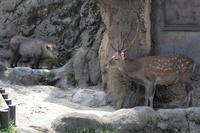 「Q」と「ナギ」のツーショット - 動物園放浪記