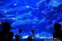 危険な生き物大作戦エリアとア-トギャラリ-エリア・・・すみだ水族館(完) - 自然のキャンバス
