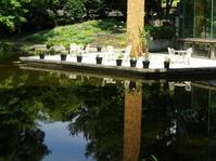 服部緑地植物園温室の花 - 彩の気まぐれ写真