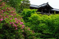 新緑とツツジの東福寺 - 花景色-K.W.C. PhotoBlog