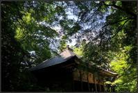 関山 中尊寺 -8 - Camellia-shige Gallery 2