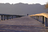 散歩時間 - 長い木の橋
