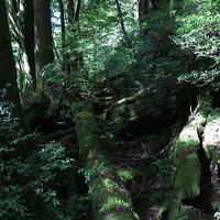 180826縄文杉 - Ken'ichi Otani Architects