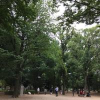 今、縄文が熱い、らしい - 木洩れ日の森から