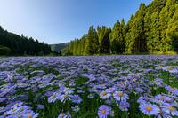 夏の花畑2018北山友禅菊の里(左京区久多) - 花景色-K.W.C. PhotoBlog
