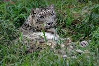 ナイトズー翌日のアジア地方 - 動物園に嵌り中