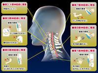 頚椎(くび)の症状 - 健康生活
