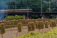 稲刈り - toshi の ならはまほろば