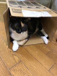 富士山第5号届かず( ノД`) - 愛犬家の猫日記