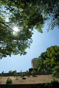 ある猛暑日の午後(松山総合公園) - かたくち鰯の写真日記2