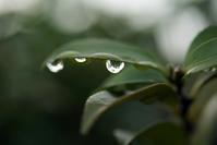 雨の合間に久々の散歩 - デジカメ一眼レフ開眼への道