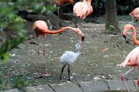 上野動物園2018年8月29日 - お散歩ふぉと