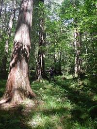 木曽・赤沢自然休養林から大鈴山 - 山にでかける日