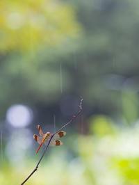 秋雨前線停滞中の週末 - オヤヂのご近所仲間日記