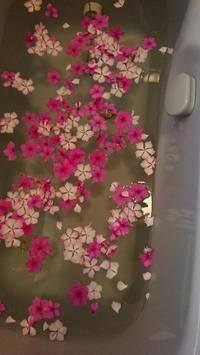 日日草の花びらを、お風呂に浮かべてみました。 -   心満たされる生活