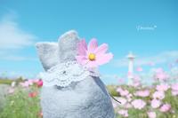 留萌の空の下、秋桜と桜子。 - Precious*恋するカメラ