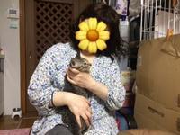 幸せになりましたよ~ - 八幡地域猫を考える会