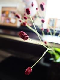 秋の赤 - Kitchen diary